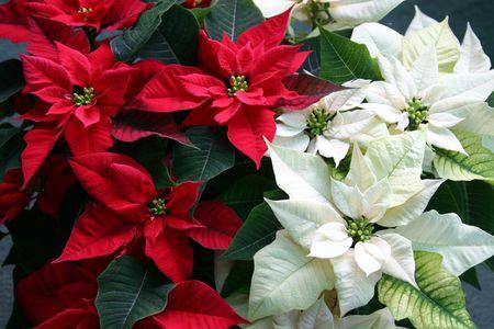 Bullington Gardens Holiday Plant Sale