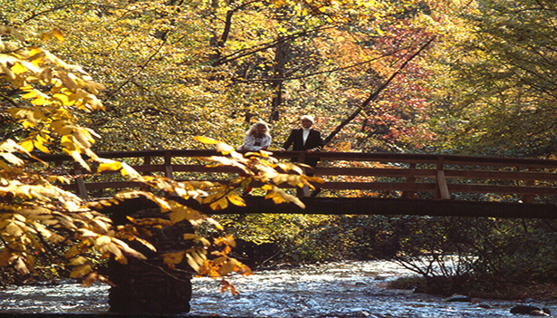 Discover Autumn Adventures in Hendersonville